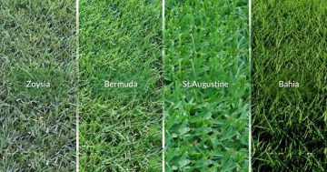 Types of Florida grass
